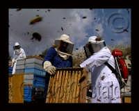 preparazione delle arni per l'estazione dei telai di miele  - Sortino (5693 clic)