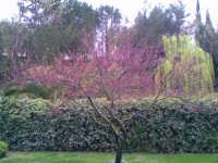 giardino  Natura Verde ENNA Rosario Colianni