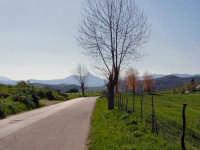 Vista della Rocca di Novara dalla Strada Provinciale per Montalbano Elicona.  - Montalbano elicona (6257 clic)