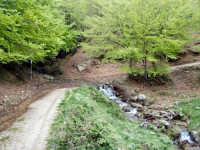 Particolare di stradello all'interno del Parco dei Nebrodi.  - Galati mamertino (4654 clic)