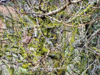 Vegetazione  - San piero patti (4750 clic)