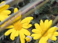 Caratteristica flora delle zone mediterranee.  - Antillo (3910 clic)