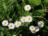 Particolare della flora in zone mediterranee.  - Antillo (3850 clic)