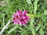 Particolare di flora montana.  - Galati mamertino (4374 clic)