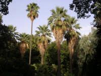 Orto Botanico PALERMO Pierangelo Gatto