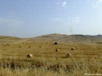 Campi di grano Campi di grano ripresi nelle campagne del palermitano lungo l'autostrada PA-CT il 23/