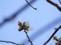 In Sicilia è primavera   - Mascalucia (1680 clic)