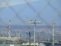 Gheppio all'aeroporto di Catania (950 clic)