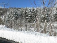Neve sulla SS116, foto del 16.02.2009  - Floresta (4491 clic)