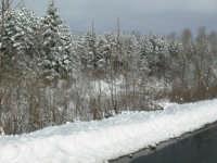 Neve sulla SS116, foto del 16.02.2009  - Floresta (4695 clic)