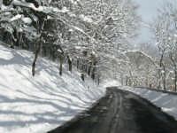 Neve sulla SS116, foto del 16.02.2009  - Floresta (6280 clic)