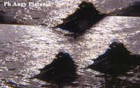 Regalbuto - Lago Pozzillo - Paesaggio  - Regalbuto (2897 clic)
