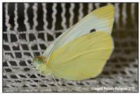 Una visita inaspettata Visto che non ho tempo per andare a fare foto macro.. una farfalla ha deciso di venirmi a trovare... a casa... ovviamente dopo le foto... le ho reso la libertà ph angela platania  - Catania (469 clic)