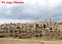 Selinunte - Templi e Necropoli  - Selinunte (2461 clic)