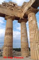 Selinunte - Templi e Necropoli  - Selinunte (2192 clic)