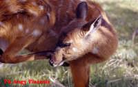 Parco Zoo di Sicilia - Etnaland - (Mi spiace non conosco molto gli animali)  - Paternò (7337 clic)