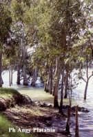 Regalbuto - Lago Pozzillo   - Regalbuto (2758 clic)