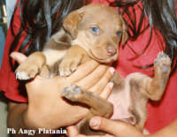 Cucciolo di cane   - Catania (4037 clic)