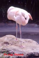 Parco Zoo - Etnaland - (non mi ricordo come si chiama)  - Paternò (5863 clic)