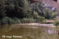 Valle dell'anapo  - Sortino (5514 clic)