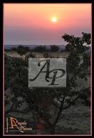 sempre lei... Etna Ph Angela Platania  - Zafferana etnea (2287 clic)