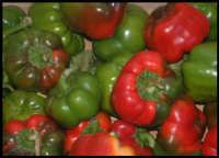 Peperoni..  - Messina (3459 clic)