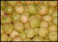 Frutta...  - Messina (2911 clic)