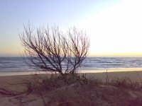 Natura morta al tramonto Natura morta al tramonto ISPICA Felice Modica