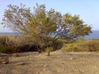 Foto particolare nella riserva  VENDICARI Felice Modica
