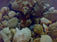Gioielli del mare Gioielli del mare ROSOLINI Felice Modica
