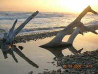radici  - Playa grande (3837 clic)