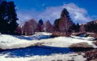 etna: paesaggio invernale  - Nicolosi (4680 clic)