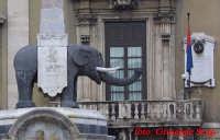 Elefante in piazza duomo  - Catania (2832 clic)