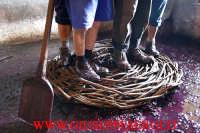 sagra della vendemmia: una fase della pigiatura dell'uva  - Viagrande (7857 clic)