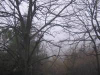 ...INVERNO, NEBBIA FITTA  - Chiaramonte gulfi (2251 clic)