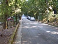 Viale delle Pinete  - Erice (1184 clic)