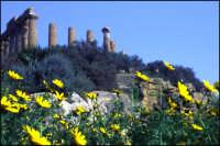 Il Tempio di Ercole  - Valle dei templi (4982 clic)
