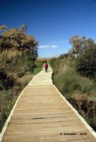 Sui sentieri della riserva.   - Vendicari (3539 clic)