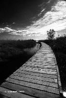Sui sentieri della riserva.   - Vendicari (3225 clic)
