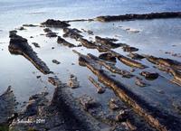La costa siracusana presso Punta della Mola. (2046 clic)