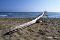 La spiaggia in corrispondenza del sito archeologico.  - Eloro (6479 clic)