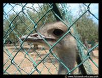 Parco Zoo di Paterno'. Struzzo.  - Paternò (6088 clic)
