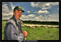 Caltanissetta. Campagna nissena. Campagna vicino la zona industriale Contrada Calderaro. Il pastore Peter e il suo gregge di pecore.   - Caltanissetta (2979 clic)