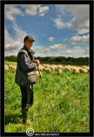 Caltanissetta. Campagna nissena. Campagna vicino la zona industriale Contrada Calderaro. Il pastore Peter e il suo gregge di pecore.   - Caltanissetta (2363 clic)