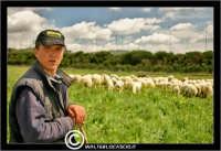 Caltanissetta. Campagna nissena. Campagna vicino la zona industriale Contrada Calderaro. Il pastore Peter e il suo gregge di pecore.   - Caltanissetta (2143 clic)