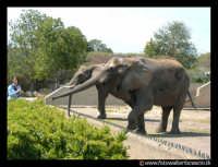 Parco Zoo di Paterno'. Elefanti. Foto Walter Lo Cascio www.walterlocascio.it  Walter Lo Cascio  - Paternò (50098 clic)