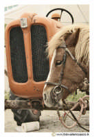 Cerda: Sagra del Carciofo 25 Aprile 2005. Il poni e il trattore.  - Cerda (3111 clic)
