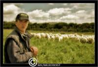 Caltanissetta. Campagna nissena. Campagna vicino la zona industriale Contrada Calderaro. Il pastore Peter e il suo gregge di pecore.   - Caltanissetta (2305 clic)