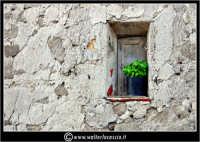 Sutera. Scorci del paese. Piantina di basilico sul davanzale di una vecchia finestra.  - Sutera (5495 clic)