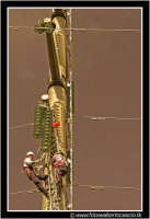Caltanissetta: Operai dell'Enel durante la riparazione di un cavo dell'alta tensione, tranciato a causa della caduta di una gru in un cantiere.  - Caltanissetta (3443 clic)